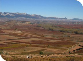Private guided rioja wine tours by car Abalons Taxi